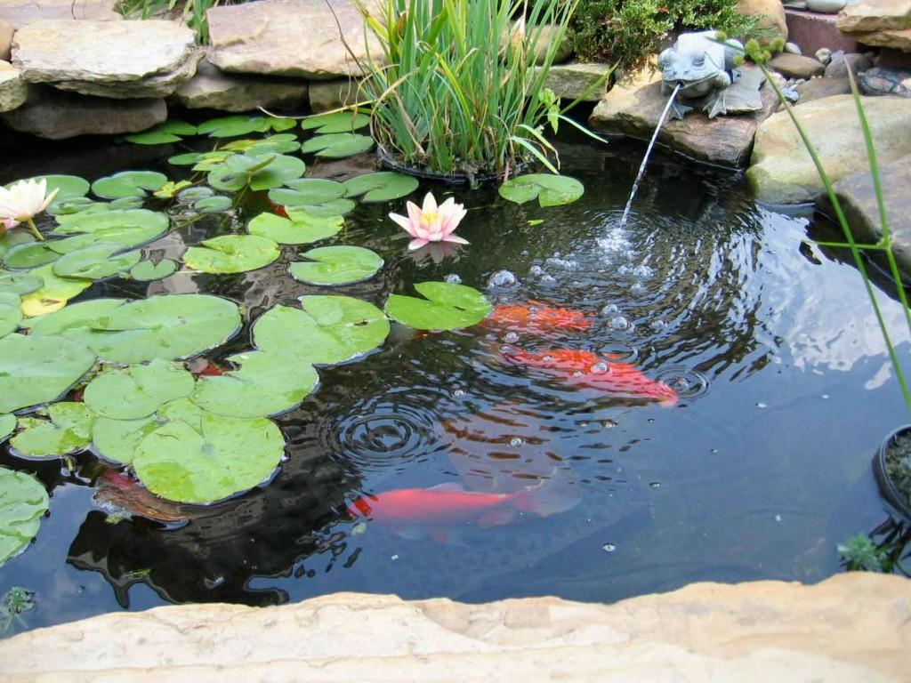 pond2_web